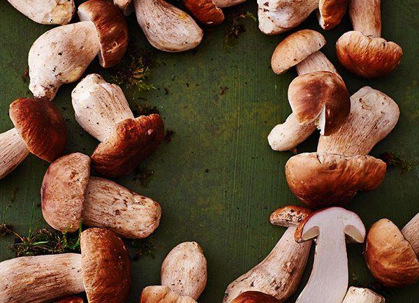 Essen & Trinken - Pilze